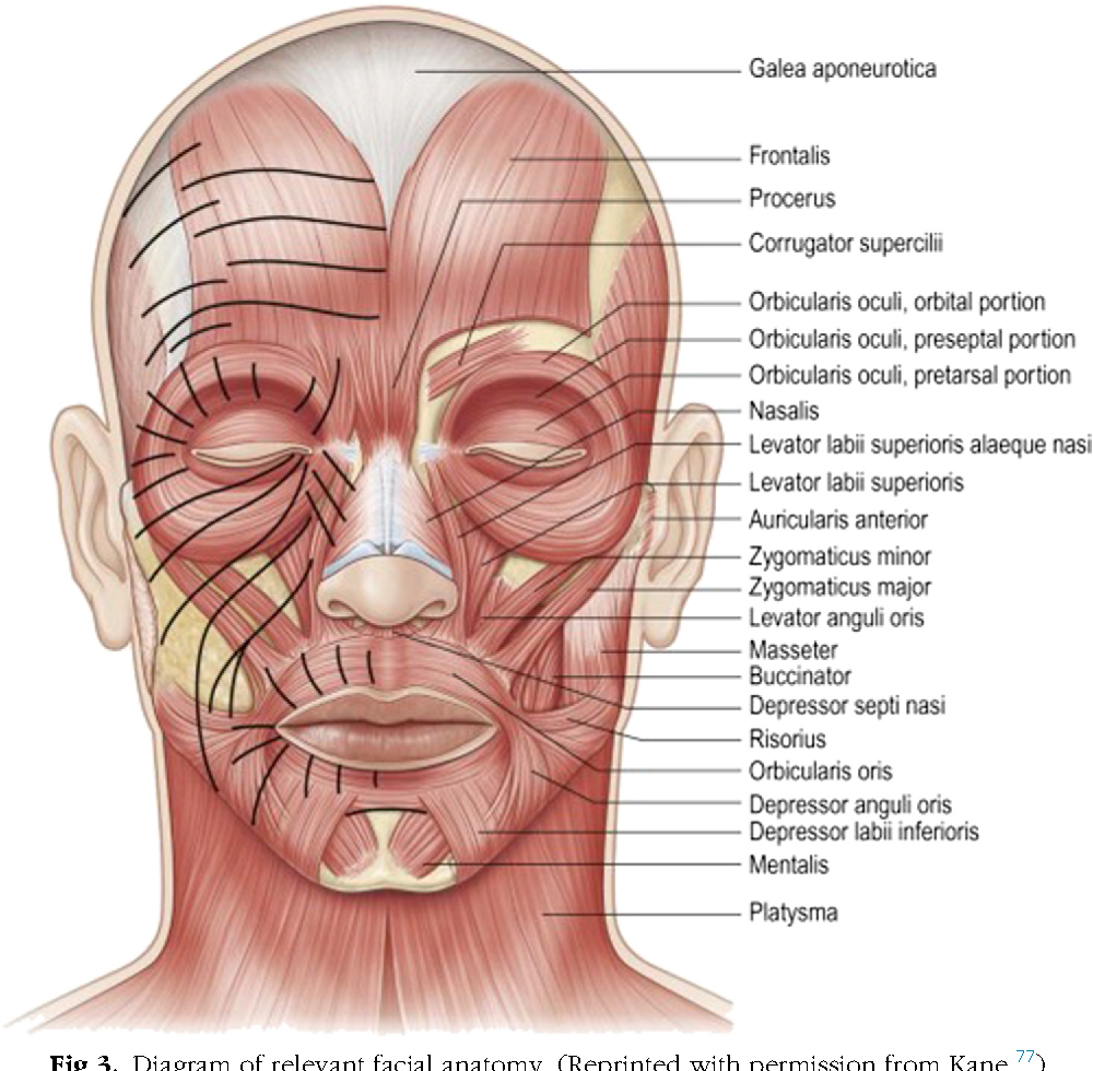 Injectable and topical neurotoxins in dermatology: Basic science ...
