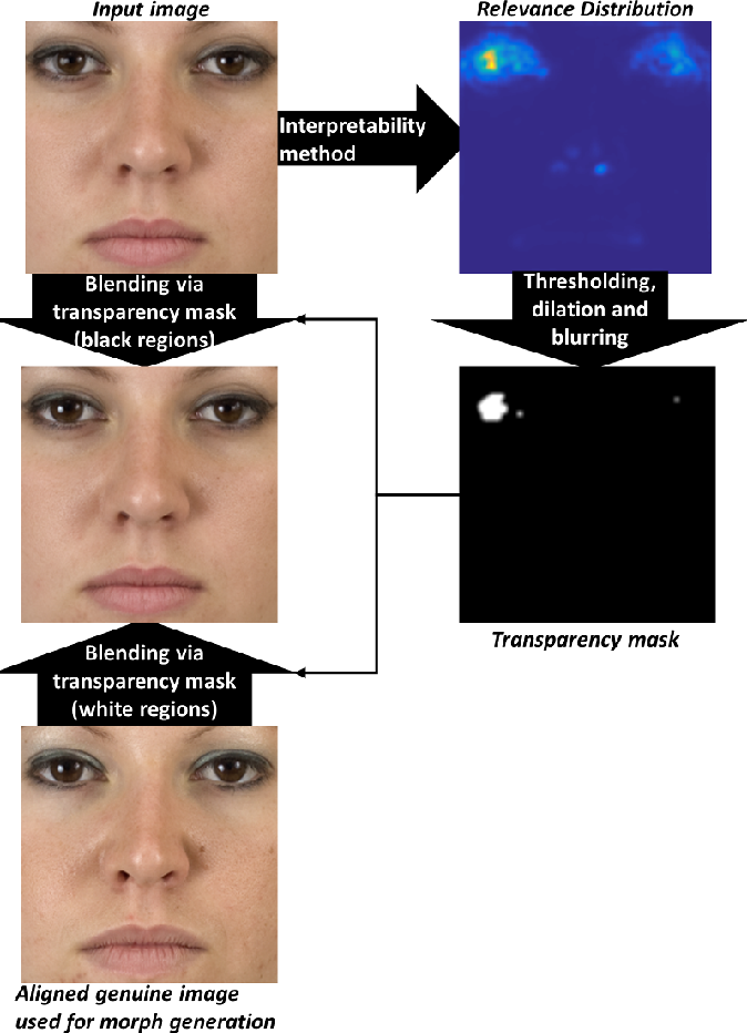 Figure 3 for Focused LRP: Explainable AI for Face Morphing Attack Detection