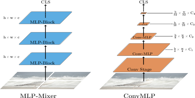 Figure 1 for ConvMLP: Hierarchical Convolutional MLPs for Vision
