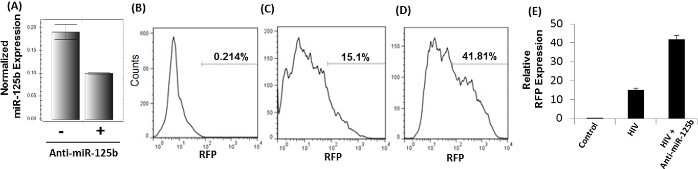 Figure 5. Knock-down of miR-125b enhances HIV-1 replication. (A) miR-125b knockdown experiments were conducted using anti-miR-125b and SupT1 cells. These cells were infected with VSV-G pseudotyped HIV-1-RFP reporter virus and infection was determined by FACS. Since cycle replication was determined by measuring intracellular RFP expression. (B) RFP expression of uninfected cells by FACS analysis. HIV-1 replication was measured in the absence (C) and presence (D) of anti-miR-125b. (E) Relative RFP expression from three independent experiments. miR-125b knockdown resulted in increased RFP expression implying miR-125b plays a critical role for cocaine-induced enhancement of HIV-1 replication. Data are representative of three independent experiments conducted in triplicates. doi:10.1371/journal.pone.0051387.g005