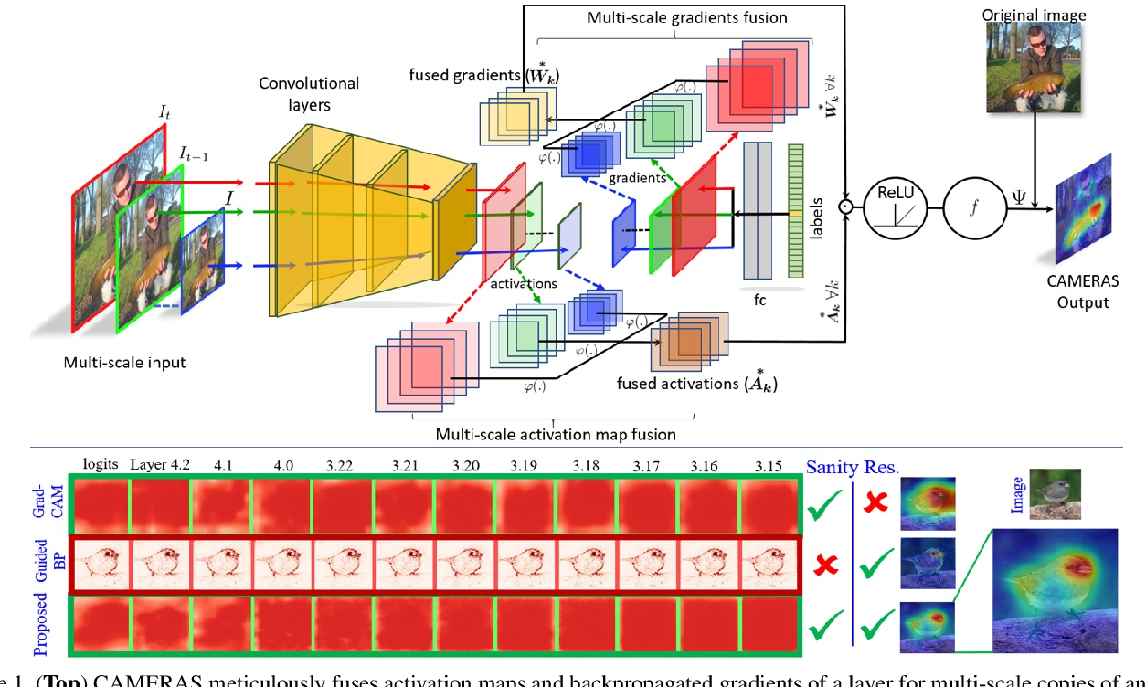 Figure 1 for CAMERAS: Enhanced Resolution And Sanity preserving Class Activation Mapping for image saliency