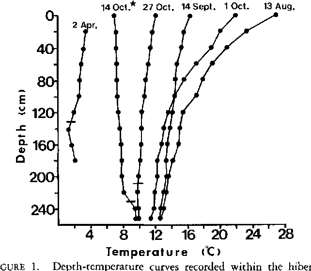 FIGURE 1. Depth-temperature curves recorded within the hibernaculum during 1983- The date of snake entrance is indicated by the star. Horizontal lines indicate water surface at sample time.