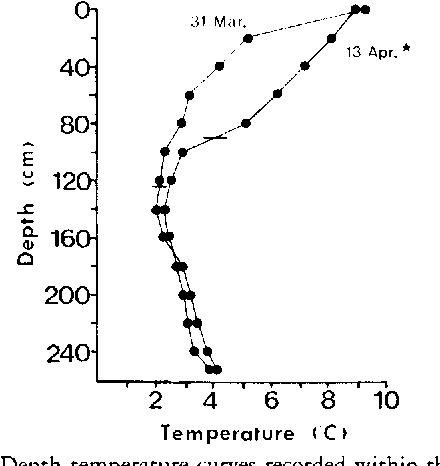FIGURE 2. Depth-temperature curves recorded within the hibernaculum during spring, 1984. The date of snake emergence is indicated by the star. Horizontal lines indicate water surface at sample time.
