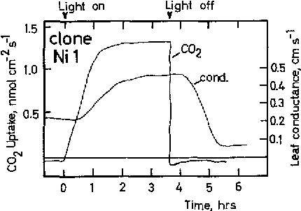 Figure 5 From Sun And Shade Ecotypes Of Solanum Dulcamara L