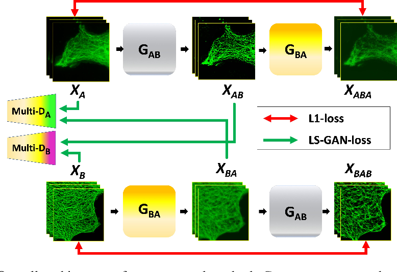 Figure 1 for Blind Deconvolution Microscopy Using Cycle Consistent CNN with Explicit PSF Layer