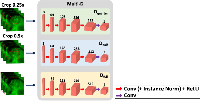 Figure 4 for Blind Deconvolution Microscopy Using Cycle Consistent CNN with Explicit PSF Layer