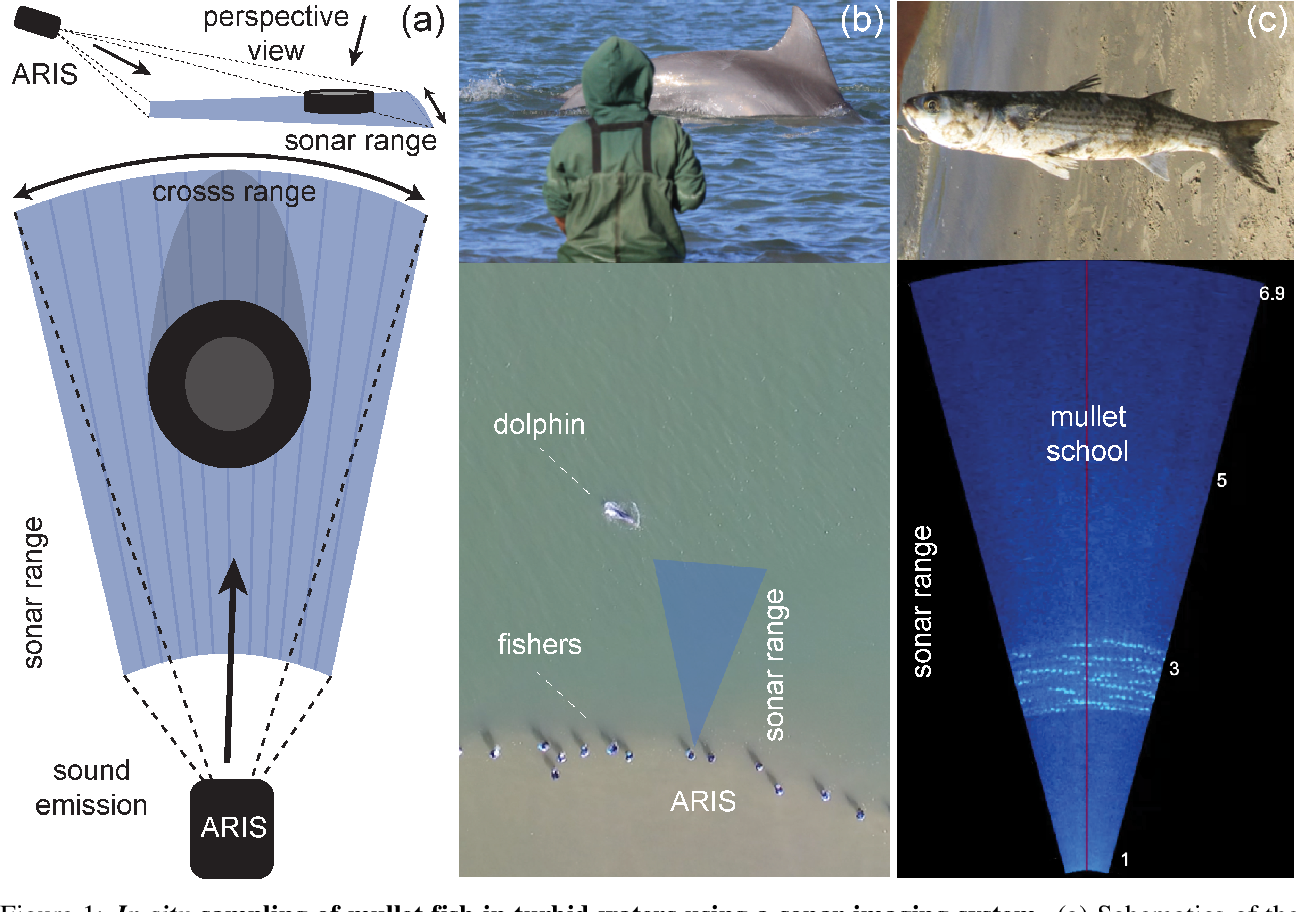 Figure 1 for Deep learning with self-supervision and uncertainty regularization to count fish in underwater images