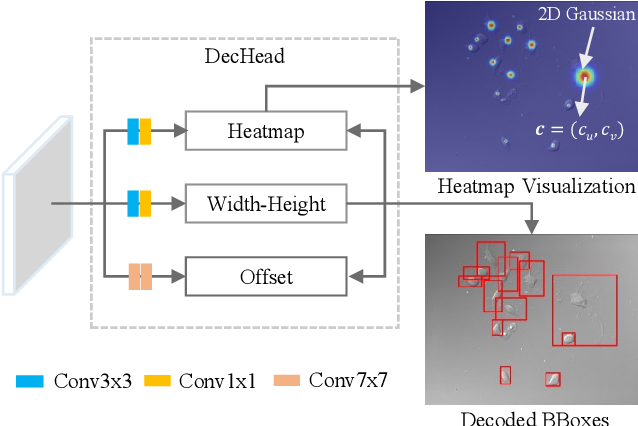 Figure 2 for Object-Guided Instance Segmentation With Auxiliary Feature Refinement for Biological Images