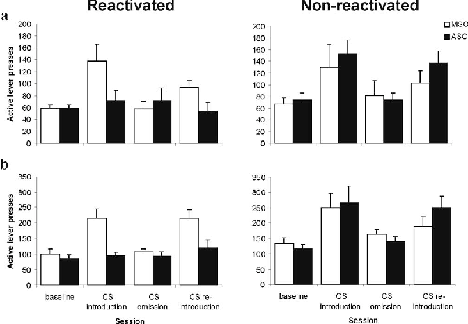 Figure 4. Effect of pre-reactivation intra-BLA Zif268 ASO on the subsequent maintenance of cocaine seeking under a second-order schedule of reinforcement. The number of active lever presses during the first, pre-cocaine interval (a) and averaged over the four post-cocaine intervals (b) are presented for representative sessions in the four stages of the experiment (n 6 –10 per group): baseline, CS introduction under a second-order schedule of reinforcement [FI15(FR10:S); session 6 after reactivation], CS omission (FI15; session 13), and CS reintroduction (session 15). Groups were infused with Zif268 ASO or MSO and reexposed to either the training context alone (Non-reactivated) or the cocaine-associated CS in the training context (Reactivated). Infusion and reexposure took place between baseline and CS introduction. Data are presented as mean SEM.