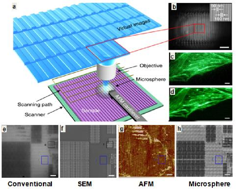 Figure 12 from Super-resolution imaging and microscopy by