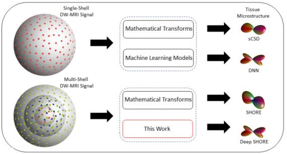Figure 1 for Enabling Multi-Shell b-Value Generalizability of Data-Driven Diffusion Models with Deep SHORE