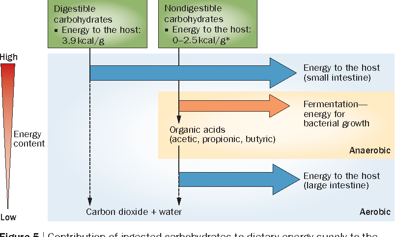 Figure 5 | Contribution of ingested carbohydrates to dietary energy supply to the host. Fermentation of dietary substrates by anaerobic microorganisms in the large intestine enables the recovery of only a fraction of the initial energy content for