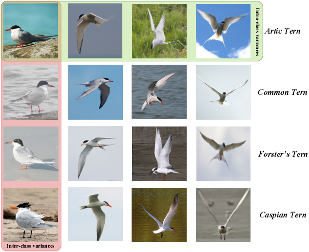 Figure 4 for Deep Learning for Fine-Grained Image Analysis: A Survey