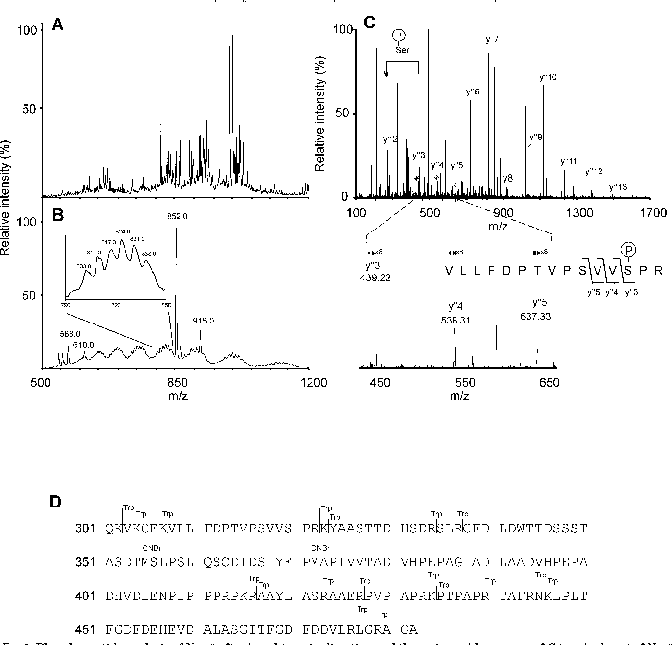 FIG. 1. Phosphopeptide analysis of Nsp 3 after in-gel trypsin digestion and the amino acid sequence of C-terminal part of Nsp3. A, negative ion ESI Q1 scan of the peptide mixture after elution from the POROS R2 microcolumn. B, precursor ion scan of m/z 279 of the same sample showing putative phosphopeptides; inset, close-up of m/z 790–850 showing a [M 2 11H]112 of a species carrying 7–12 phosphates. C, ESI-CID MS analysis of the 853.4 [M 1 2H]21 ion. The sequence of the peptide and the phosphorylation site could be determined from a Y-ion series. Diagnostic ions Y3 to Y5, which allow for localization of phosphorylation to Ser320, are marked with an asterisk and shown in the inset. Spectra A and B were acquired using a triple-quadrupole instrument, and spectrum C using a quadrupole-time of flight instrument. D, amino acid sequence of the C-terminal part of SFV Nsp3. Cleavage sites by trypsin (Trp) and CNBr are marked with lines.
