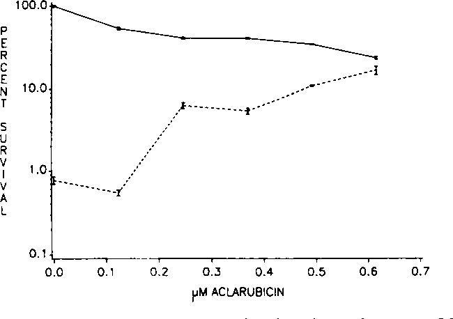 Fig. 2. ACLA dose-response curves obtained in a clonogenic assay on OCNYH cells incubated for 3 h. Effect of ACLA in the absence ( ) and presence ( ) of 0.06 JIMDAU. Poinls, mean of triplicate cultures; bars, SE.