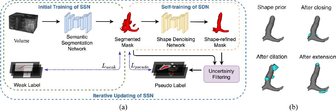 Figure 1 for Weakly Supervised Volumetric Segmentation via Self-taught Shape Denoising Model
