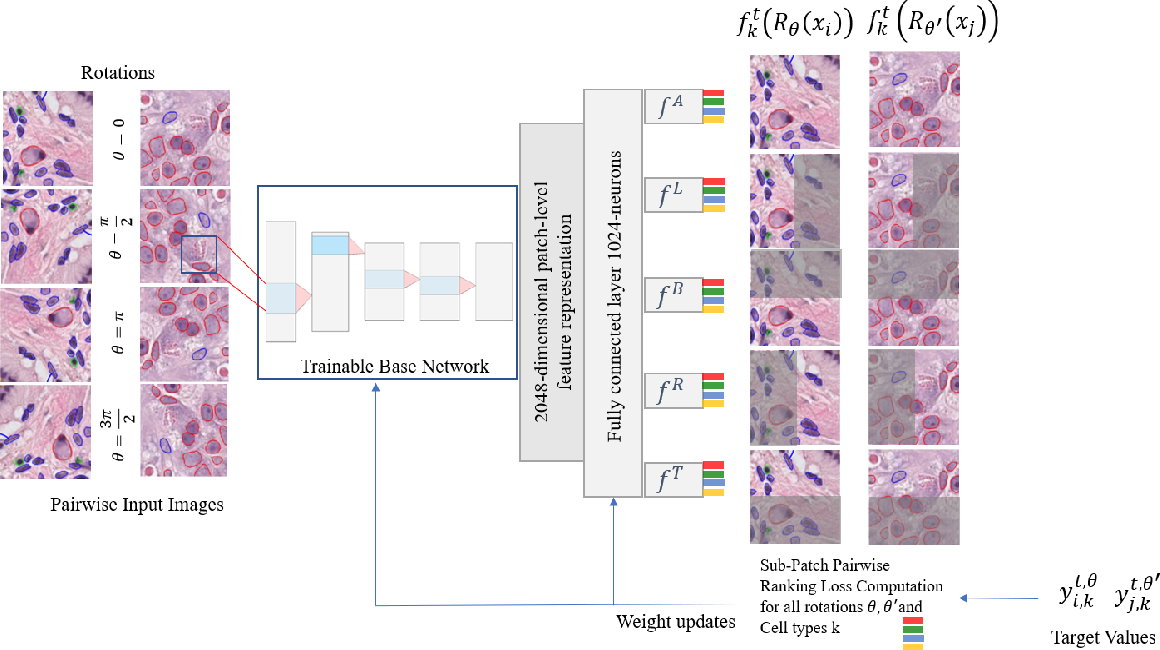 Figure 1 for ALBRT: Cellular Composition Prediction in Routine Histology Images