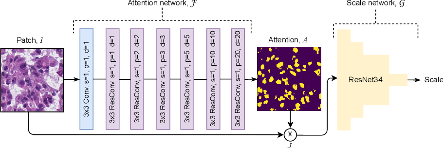 Figure 1 for Self-Supervised Nuclei Segmentation in Histopathological Images Using Attention