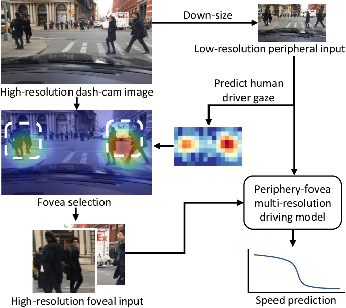 Figure 1 for Periphery-Fovea Multi-Resolution Driving Model guided by Human Attention