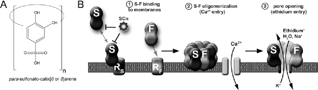 Figure 1 SCn structure and simplified mode of action of leukotoxins and SCn