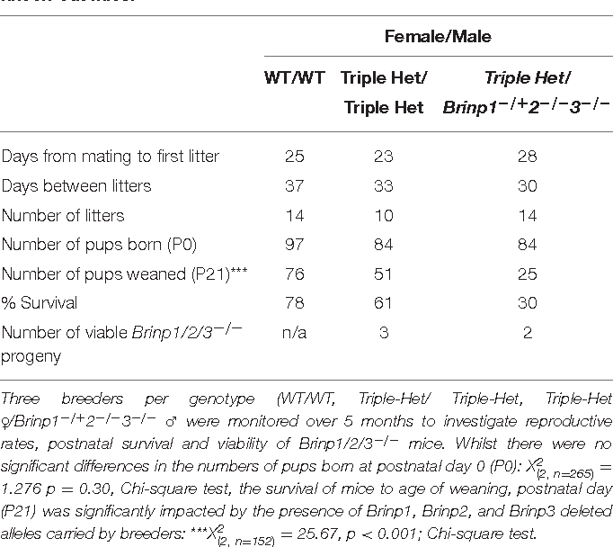 TABLE 1 | Reproductive phenotyping: generation of Brinp1/2/3−/− triple knock-out mice.