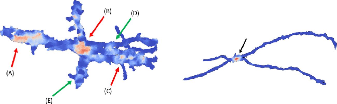 Figure 1 for Morphological Error Detection in 3D Segmentations