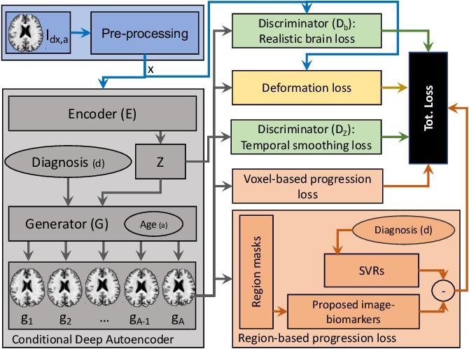 Figure 1 for Degenerative Adversarial NeuroImage Nets: Generating Images that Mimic Disease Progression