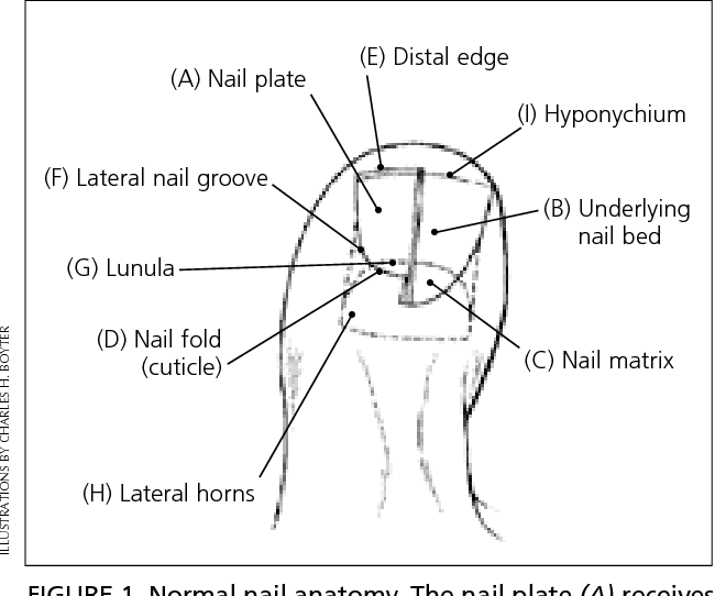 Figure 1 From Ingrown Toenail Removal Semantic Scholar