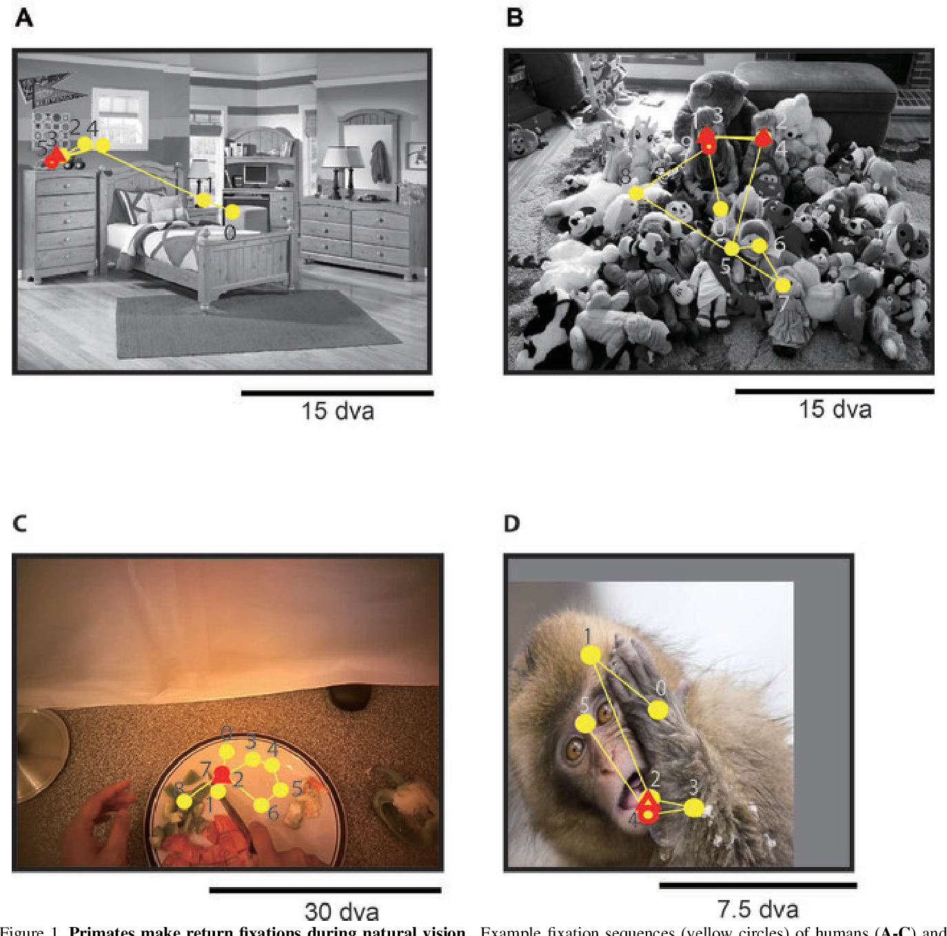 Figure 1 for Look Twice: A Computational Model of Return Fixations across Tasks and Species