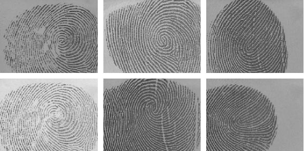 Figure 4 for FingerNet: Pushing The Limits of Fingerprint Recognition Using Convolutional Neural Network