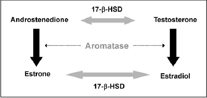PDF] Evaluation of Active Hexose Correlated Compound (AHCC