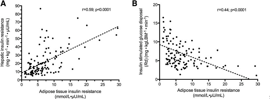 Fig. 5. Relationship between adipose tissue IR with liver and skeletal muscle IR.