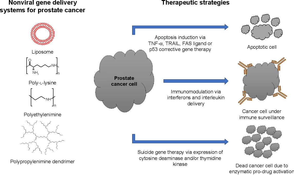Figure 2 Nonviral gene delivery systems and therapeutic strategies for prostate cancer therapy. Abbreviation: ePR, enhanced permeability and retention.
