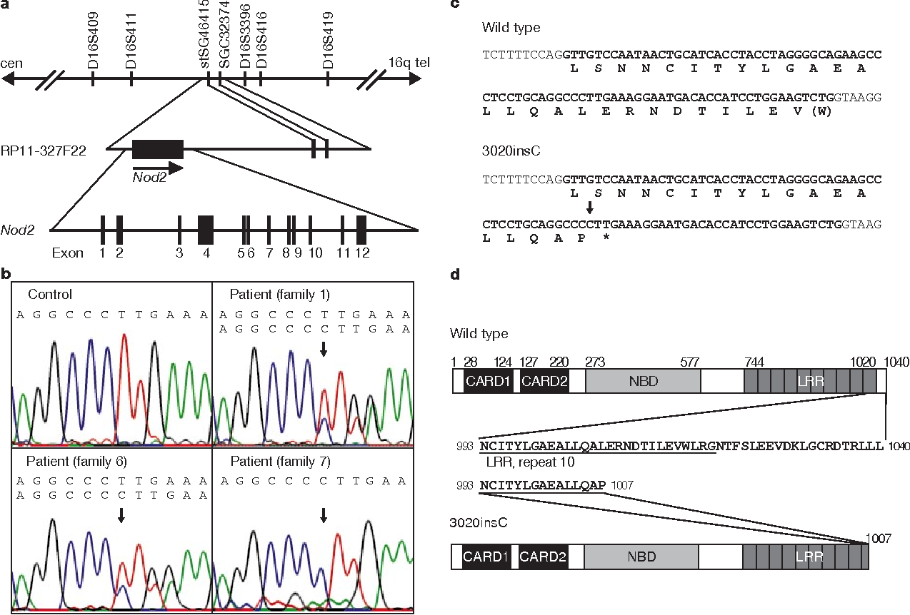 A frameshift mutation in NOD2 associated with susceptibility to ...