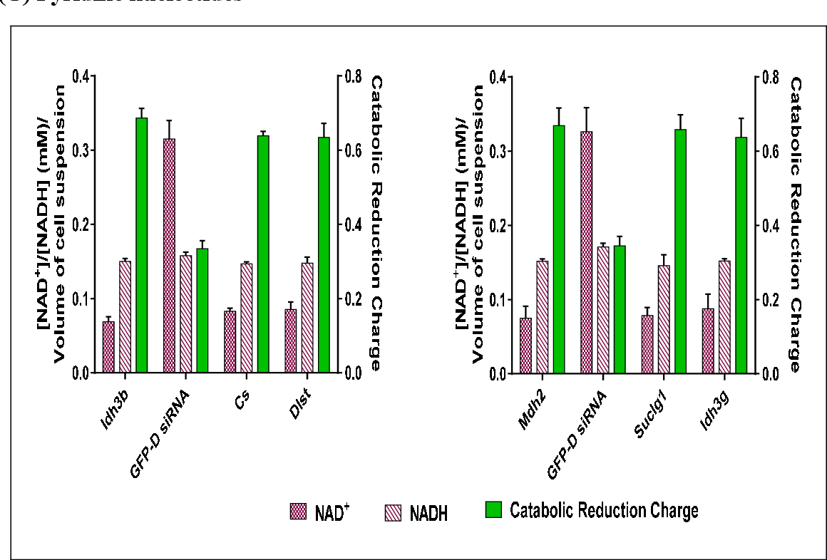 Figure 6-11 from Interference of central metabolism (TCA