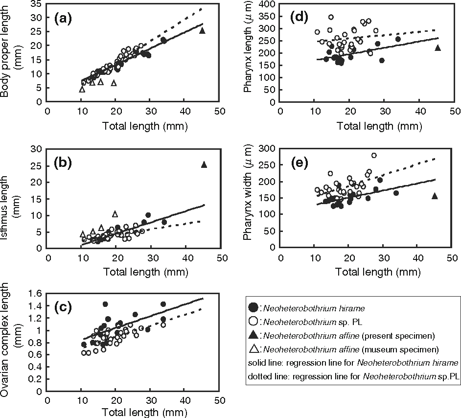Fig. 2 Correlation between total length and measurements of selected body parts of Neoheterobothrium hirame and Neoheterobothrium sp. PL. Only measurements in which significant differences were detected by ANCOVA (see
