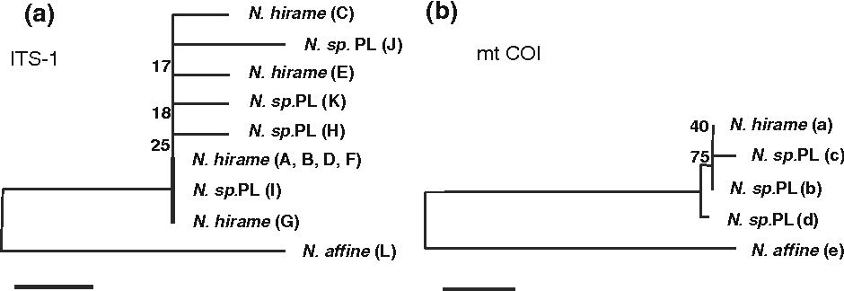 Fig. 3 Unrooted phylogenetic trees showing genetic distances in sequences of ITS1 and mt COI regions among Neoheterobothrium hirame (N. hirame), Neoheterobothrium sp. PL (N. sp. PL), and Neoheterobothrium affine. The letters in parentheses after species names correspond to the sequence types shown in Tables 3 and 4. The neighbor-joining method was used for construction of the trees. Bootstrap estimates of clade confidence generated using 1,000 replicates are shown as percentages