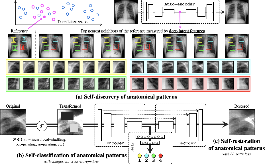 Figure 1 for Learning Semantics-enriched Representation via Self-discovery, Self-classification, and Self-restoration