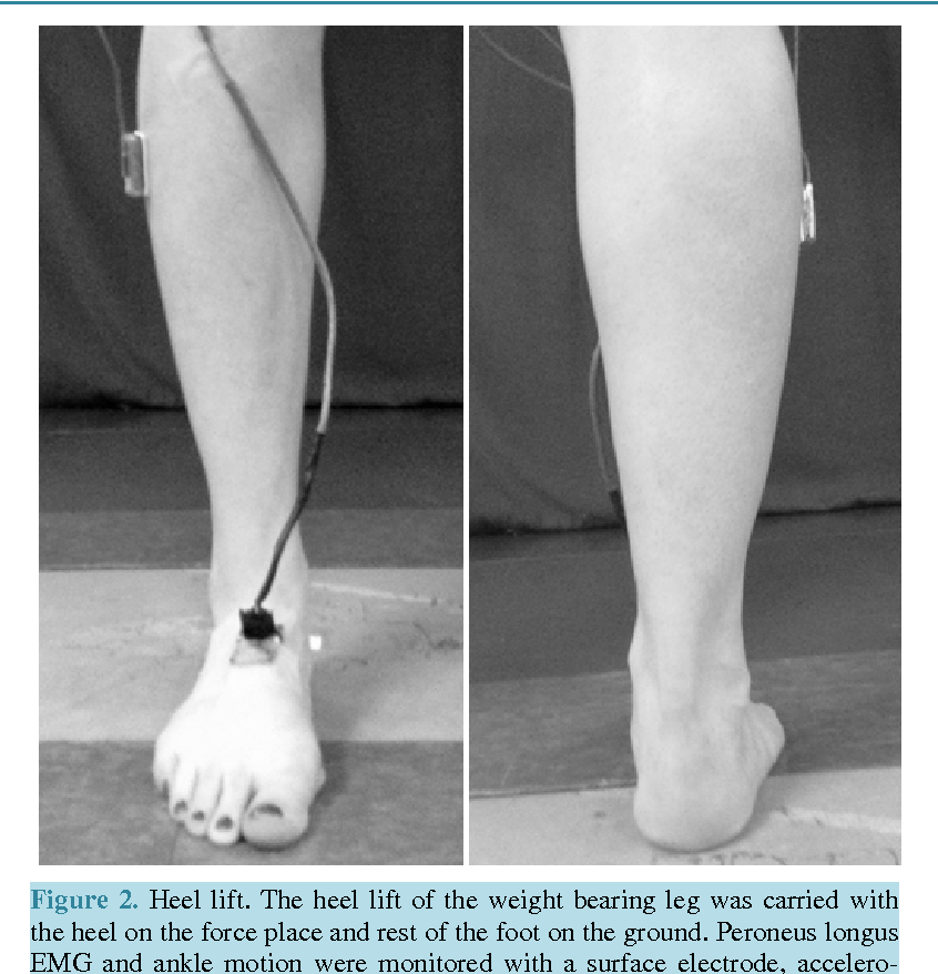 Surface Electromyographic Study of Peroneus Longus Activation during ...