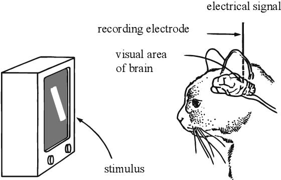 Figure 1 for Understanding Neural Networks via Feature Visualization: A survey