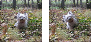 Figure 4 for What Happened to My Dog in That Network: Unraveling Top-down Generators in Convolutional Neural Networks