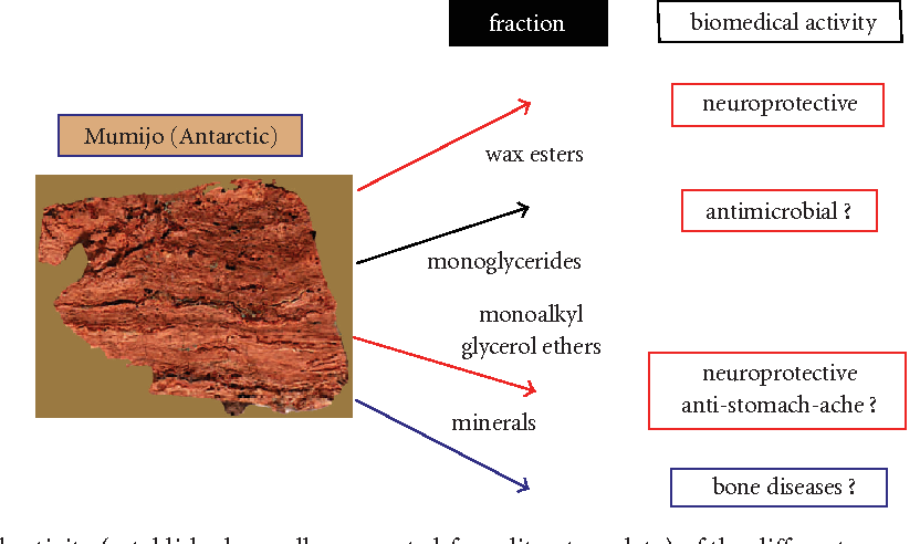 Figure 4: Main biomedical activity (established as well as expected from literature data) of the different organic fractions, which have been separated from Antarctic Mumijo. A further potential can be supposed from the inorganic component(s), the minerals, with respect to their ameliorating function in bone diseases. The scheme shows also a cross section through a Mumijo sample from Antarctica (size: 2.5 cm). The layered deposition of the waxy organic material is self-evident.