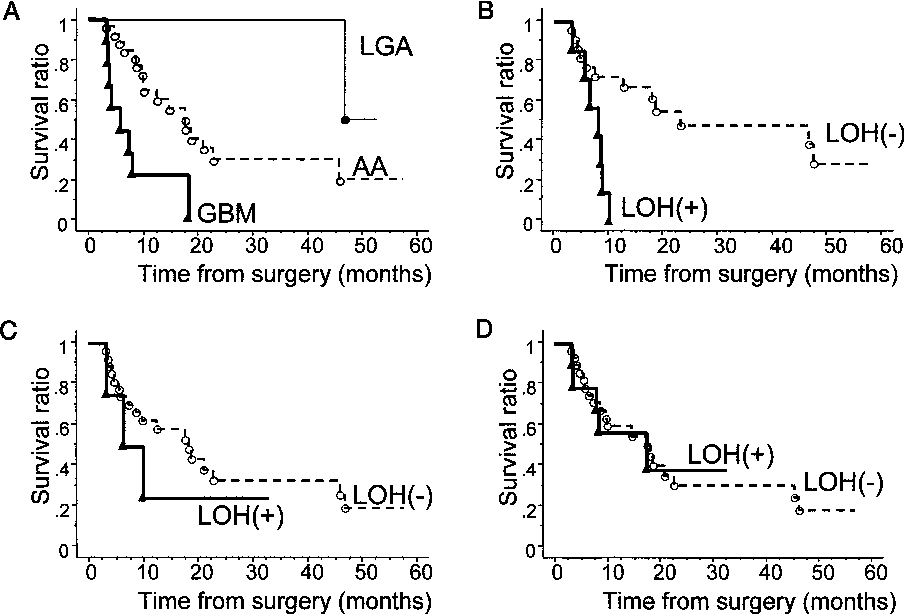 Figure 4. Kaplan–Meier survival curves. (A) Survival curves plotted in each of the histological grading group (LGA; low-grade astrocytoma, AA; anaplastic astrocytoma, GBM; glioblastoma multiforme). On every combination the difference in the curves were significant (p = 0.0009). (B–D) Kaplan–Meier survival curves in astrocytoma patients in respect to the presence or absence of LOH in each segment of 10q around PTEN/MMAC1 (B), NEURL (C), and DMBT1 (D). Lines with closed and open circles denote LOH (+) and LOH (−) cases, respectively. Only the difference in column B was statistically significant (p = 0.0020).