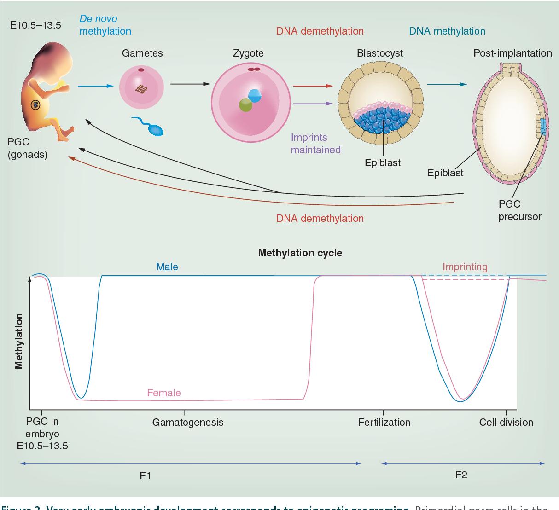 Transgenerational Epigenetic >> Transgenerational Epigenetic Inheritance An Open Discussion