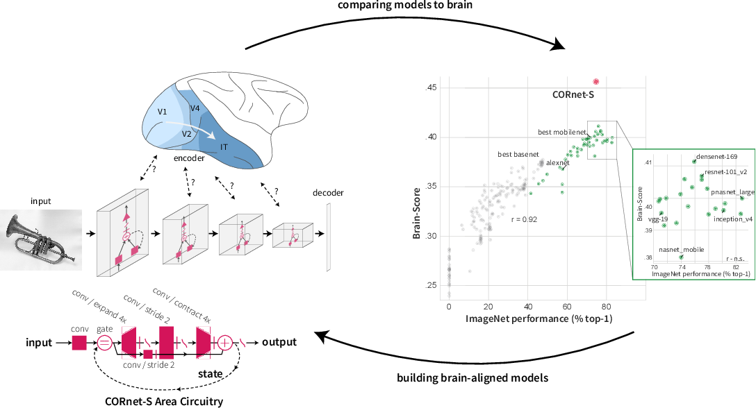 Figure 1 for Brain-Like Object Recognition with High-Performing Shallow Recurrent ANNs