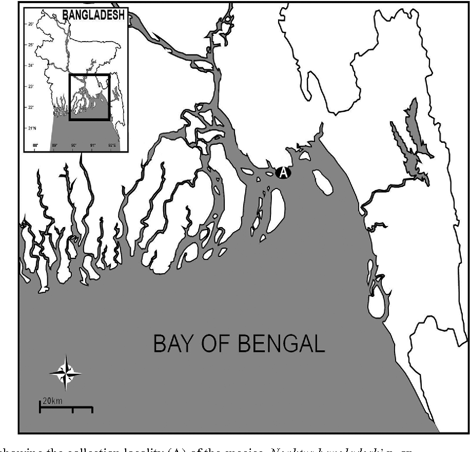 FIGURE 1. Map showing the collection locality (A) of the species, Nephtys bangladeshi n. sp.