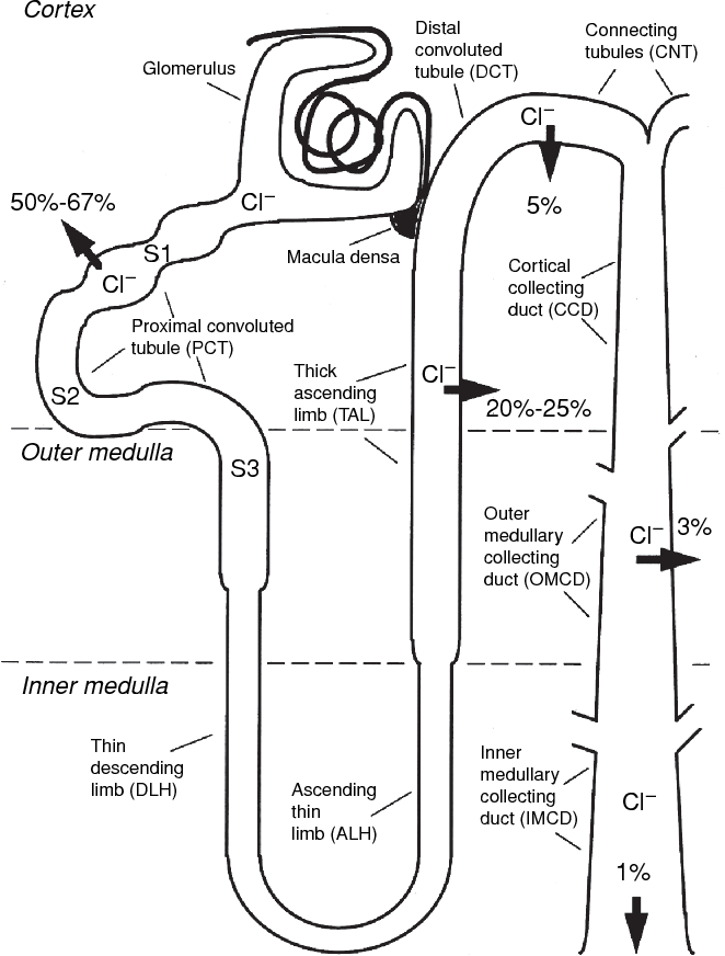 Figure 1 From Chloride Transport