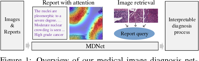 Figure 1 for MDNet: A Semantically and Visually Interpretable Medical Image Diagnosis Network