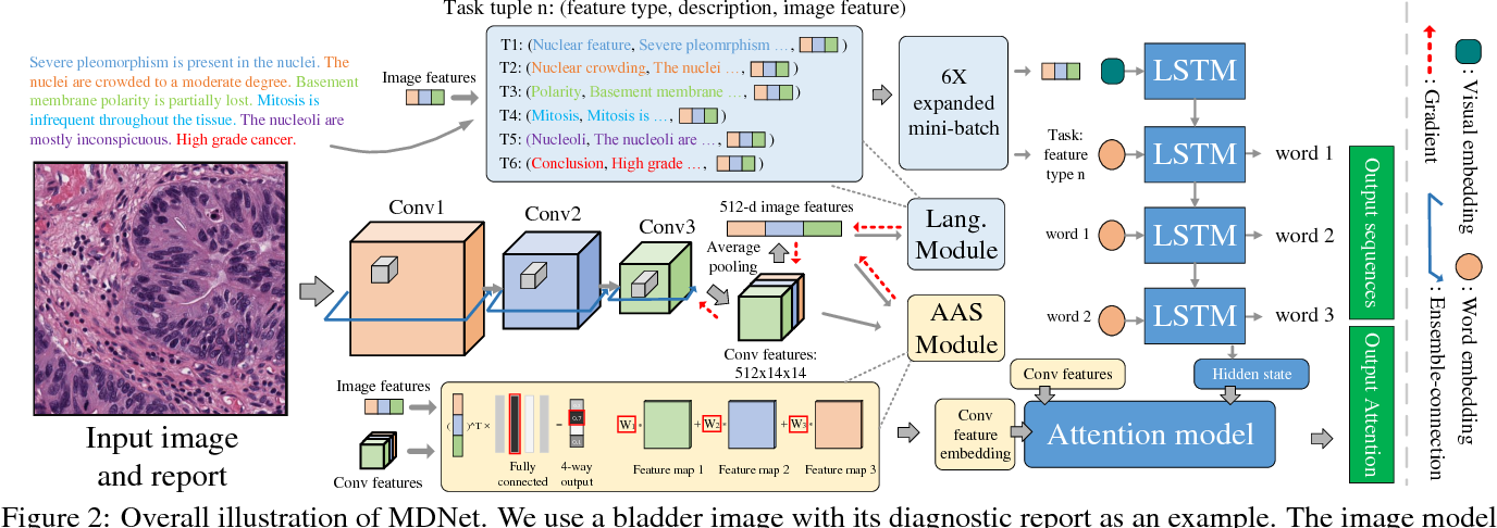 Figure 2 for MDNet: A Semantically and Visually Interpretable Medical Image Diagnosis Network