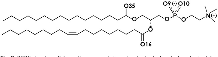 Fig. 2. POPC structure. Schematic representation of palmitoyl-oleoyl-phosphatidylcholine with atom names (O#) denoting oxygens referred to in the text.